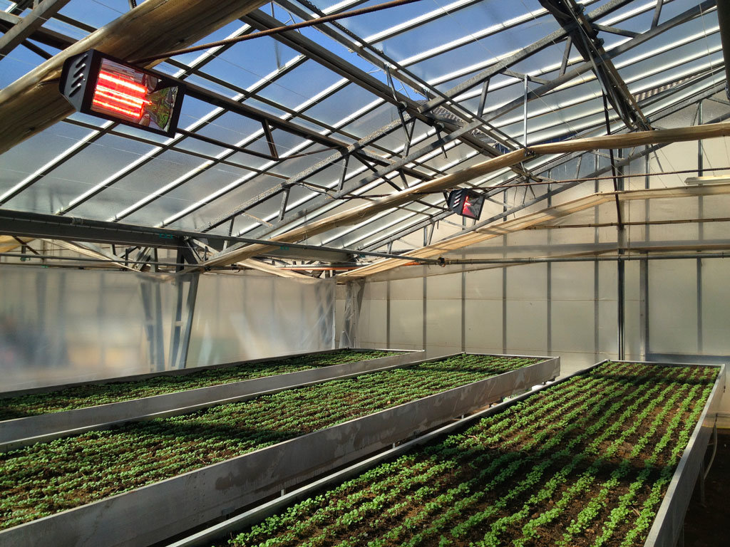 serra per la coltivazione di basilico riscaldata con i riscaldatori elettrici a raggi di star progetti